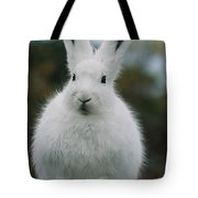 Portrait Of An Arctic Hare Tote Bag