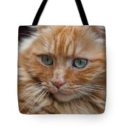Portrait Of An Orange Kitty Tote Bag