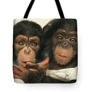 Portrait Of Two Young Laboratory Chimps Tote Bag