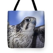 Prairie Falcon In Flight Tote Bag