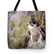 Prairie Falcon On Rock Ledge Tote Bag