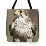 Prairie Falcon Perches On The Ground Tote Bag