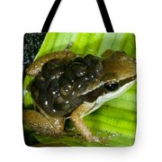 Pratts Rocket Frog With Young Tote Bag