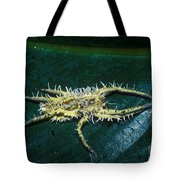 Predatory Tropical Fungus Tote Bag
