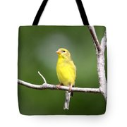 Pretty Little Lady Tote Bag