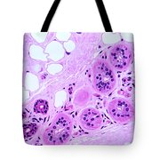 Primate Sweat Gland Tote Bag