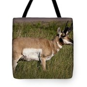 Pronghorn Male Custer State Park Black Hills South Dakota -1 Tote Bag