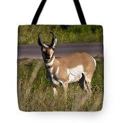 Pronghorn Male Custer State Park Black Hills South Dakota -2 Tote Bag