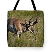 Pronghorn Male Custer State Park Black Hills South Dakota -3 Tote Bag