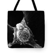 Pseudopodia Sem Tote Bag by Science Source