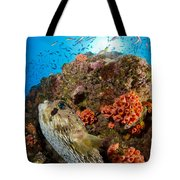 Pufferfish And Reef, La Paz Mexico Tote Bag