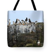 Puffins On A Cliff Edge Tote Bag
