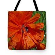 Pumpkin Poppy Tote Bag