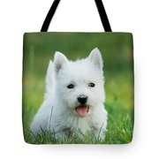 Puppy West Highland White Terrier Tote Bag