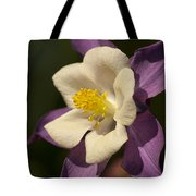 Purple And White Columbine Blossom Facing The Sun - Aquilegia Tote Bag
