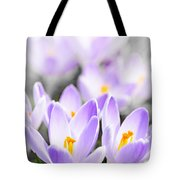 Purple Crocus Blossoms Tote Bag