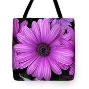 Purple Trio Tote Bag