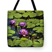 Purple Water Lilies - Nymphaea Capensis  Tote Bag