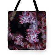 Pygmy Seahorse, Australia Tote Bag