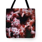 Pygmy Seahorse, Indonesia Tote Bag