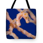 Pygmy Seahorse On Sea Fan, Papua New Tote Bag by Steve Jones