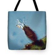 Pyxicola Sp Tote Bag