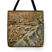 Quail On Rock Tote Bag