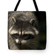 Raccoon 2 Tote Bag