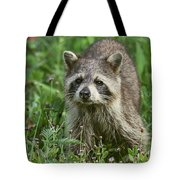 Raccoon Looking For Lunch Tote Bag