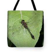 Racket-tailed Emerald Dragonfly Tote Bag