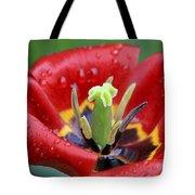 Rain Kissed Tulip 2 Tote Bag