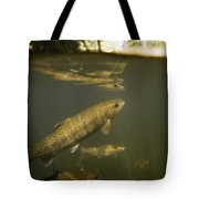 Rainbow Trout In Creek  Aptos California Tote Bag