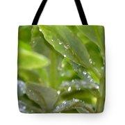Raindrops On Sedum Tote Bag