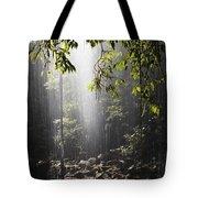 Rainforest, Bellingen, Australia Tote Bag
