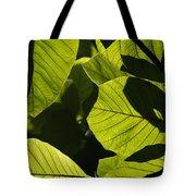Rainforest Leaves Showing Sunlight Tote Bag