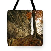 Raven Rock And Autumn Colored Beech Tote Bag
