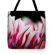Red And White Tulips In Holland Tote Bag