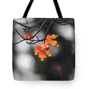 Red And Yellow Fall Leave's Closeup Tote Bag