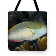 Red-banded Parrotfish Bonaire Tote Bag