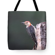 Red-bellied Woodpecker - Looking For Food Tote Bag