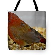 Red Billed Fire Finch Tote Bag