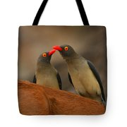 Red-billed Oxpeckers Tote Bag