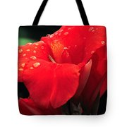 Red Canna With Raindrops Tote Bag
