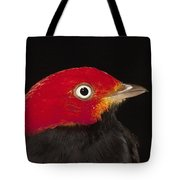 Red-capped Manakin Pipra Mentalis Male Tote Bag