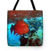 Red Close-up Grouper Tote Bag