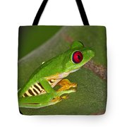 Red-eyed Leaf Frog Tote Bag by Tony Beck