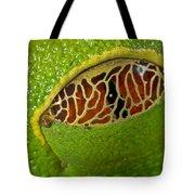 Red Eyed Tree Frog Eyelid Costa Rica Tote Bag