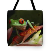 Red-eyed Tree Frog In Costa Rica Tote Bag