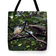 Red-eyed Vireo Feeding Cowbird Fledgling Tote Bag