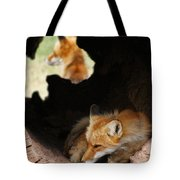 Red Fox Dreaming Tote Bag